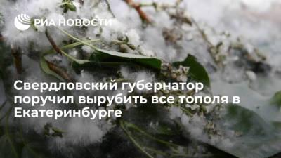 Губернатор Свердловской области Куйвашев поручил главе Екатеринбурга вырубить все тополя