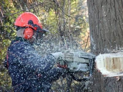 Свердловский губернатор приказал вырубить все тополя в Екатеринбурге