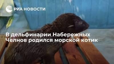 В дельфинарии Набережных Челнов родился южноамериканский морской котик