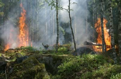 Тысячи людей эвакуированы из-за лесных пожаров в США