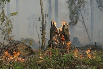 В Карелии из-за лесных пожаров ввели режим ЧС