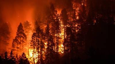 На всей территории Карелии введен режим ЧС из-за лесных пожаров