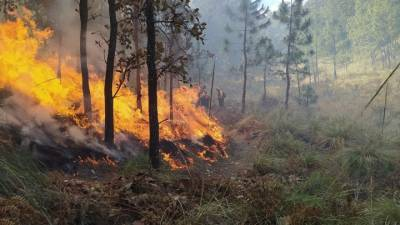 В Карелии введен режим ЧС. На площади 7 280 га действует 33 пожара