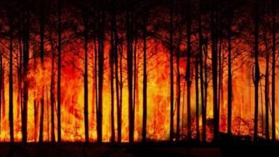 На территории Карелии введен режим ЧС из-за лесных пожаров