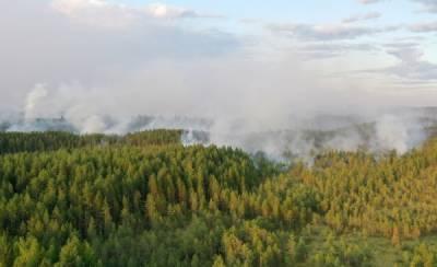 Путин предложил передать часть полномочий по охране лесов на федеральный уровень