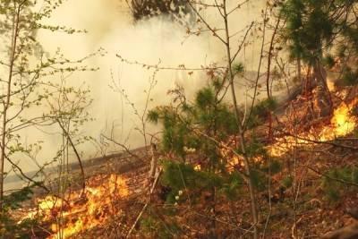 В Якутии за сутки потушили девять очагов лесных пожаров