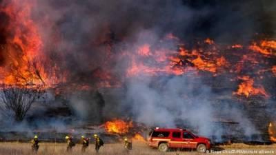 Площадь лесных пожаров в США превысила 500 тысяч гектаров