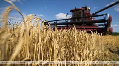 В Гомельской области на уборку зерновых вышли 85 семейных экипажей