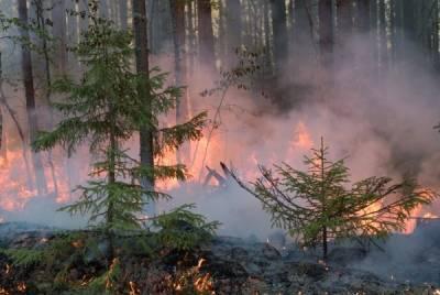 В России за сутки потушили 59 природных пожаров