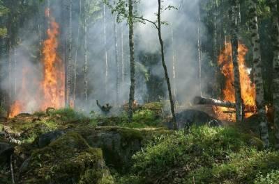 В Якутии горят леса на площади 2,4 тыс. га