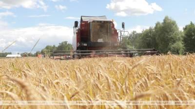 Первых тысячников чествовали в Гомельской области на уборке зерна