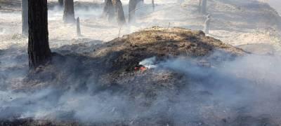Власти Карелии сообщили о локализации половины действующих лесных пожаров