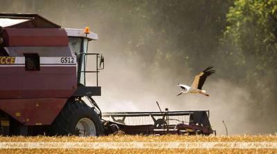 В Гомельской области зерновые убраны на 23% площадей