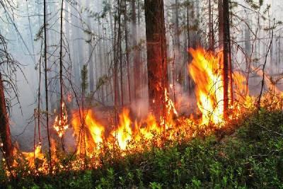 В муниципалитете Смоленской области ожидается чрезвычайная пожароопасность