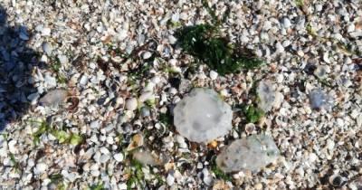 Нашествие медуз в Азовском море: эксперт назвала причины этого явления