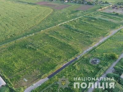 В Херсонской области выявили рекордную плантацию конопли на 300 млн грн – полиция