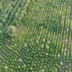 В Херсонской области выявили плантацию конопли на 300 млн грн. Фото. Видео