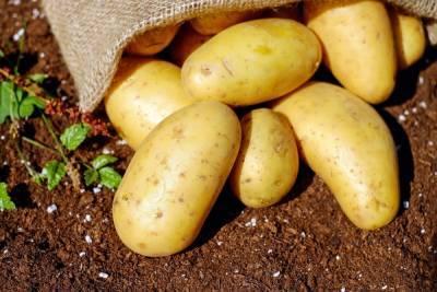Картофель может стать причиной развития трёх заболеваний