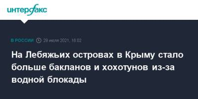 На Лебяжьих островах в Крыму стало больше бакланов и хохотунов из-за водной блокады