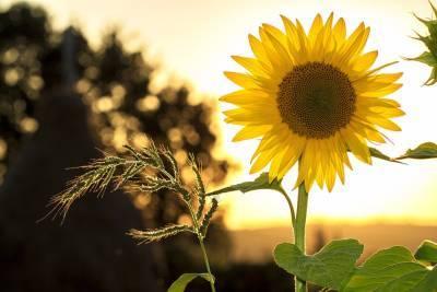 До +30°С жары ожидается в Беларуси 30 июля