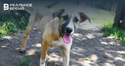 В поселке Кадышево 31 июля будет работать мобильный пункт вакцинации и стерилизации собак