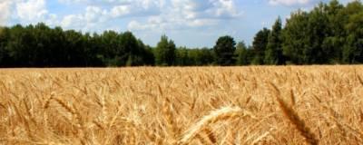 Глава Башкирии рассказал о последствиях засухи в республике