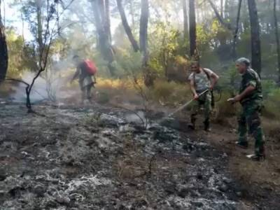 Сотрудники МЧС Азербайджана участвуют в тушении лесных пожаров в Турции (ВИДЕО)