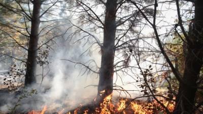 Россиянка помогла жителям пылающих деревень на Кипре спастись от огня