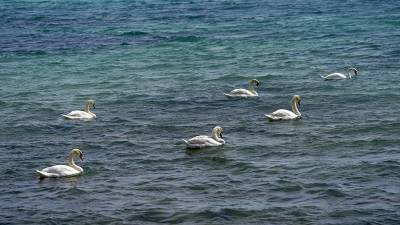 Роспотребнадзор рассказал об изменениях качества воды в морях России