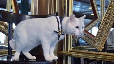 Хвостатые достопримечательности: Что делают коты в Эрмитаже и на корабле?