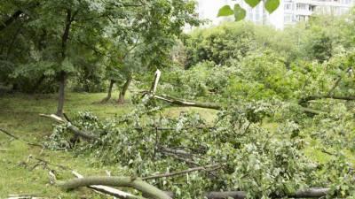 Последствия непогоды: в Витебской области Беларуси разбирают ветровалы