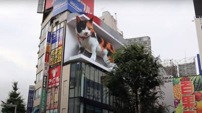 Огромный 3D-кот поселился на стене японского торгового центра в Токио