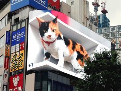 """В одном из районов Токио """"поселился"""" большой 3D-кот"""