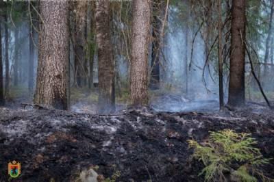 В России за минувшие сутки потушили 28 лесных пожаров