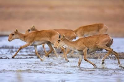 Greenpeace: в России начнётся трофейная охота на исчезающих животных
