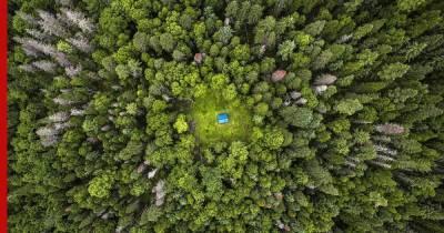 Почему планета теряет все больше лесов, и поможет ли их восстановление предотвратить климатический кризис