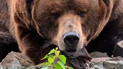 Русские об образе России за границей: медведи, холод и Путин
