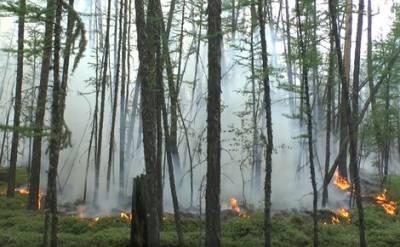Минприроды России предлагает ввести режим чрезвычайной ситуации в Иркутской области и Якутии из-за лесных пожаров