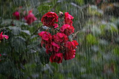 Дожди и грозы ожидаются в Беларуси 11 августа