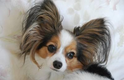 Жительница Твери хотела купить породистых щенков, но осталась без собак и без денег