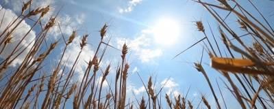 В Башкирии ввели режим ЧС из-за гибели посевов от засухи