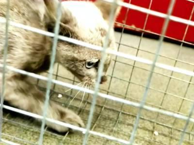 В киевском метро три дня искали пропавшего котенка