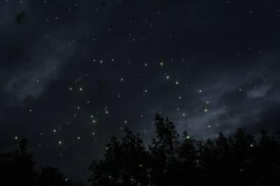Жители Башкирии могут увидеть летний звездопад – Персеиды