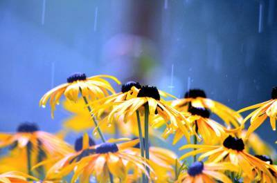 Кратковременные дожди и грозы ожидаются в Беларуси 14 августа
