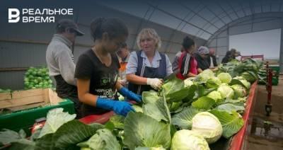 В Татарстане за неделю вновь снизились цены на продукты «борщевого набора»