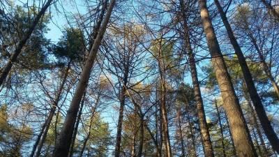МЧС предупреждает об опасности в лесах Башкирии