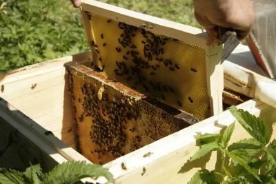 Владимир Путин рекомендовал всем жителям России попробовать башкирский мед