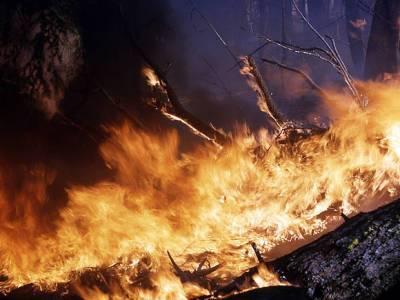 Сотни детей вывезли из лагеря в Башкирии из-за лесных пожаров