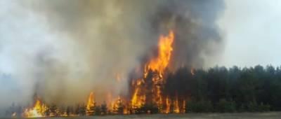 В нескольких областях Украины объявлен высокий уровень опасности пожаров