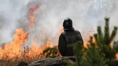 Глава Якутии поручил разработать новую программу действий защиты лесов от пожаров